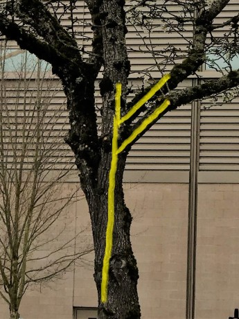 Fehu Tree 2